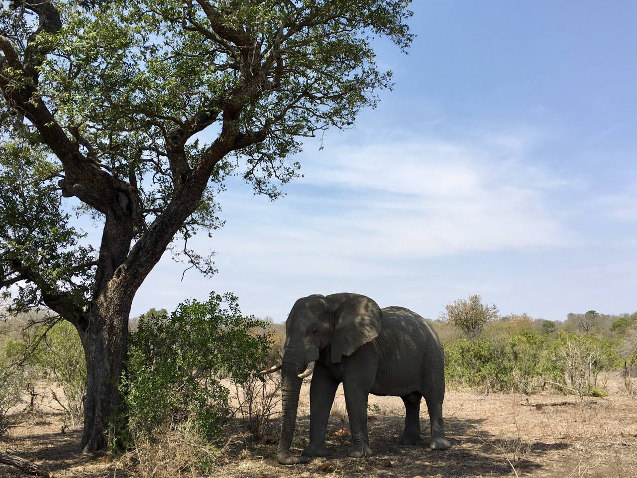 Beauty in a Barren Land (South African Bush, Day 2)